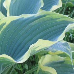 Arc De Triomphe Hosta